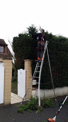 Entretien de jardin 78 saint germain en laye versailles for Entretien jardin 78